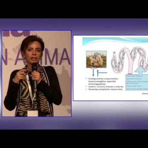 SINA, Biofarma. PhD. Fernanda Almeida: Estrategías nutricionales durante la gestación